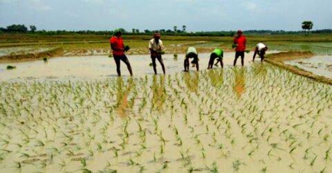 চাঁপাইনবাবগঞ্জে আষাঢ়ের বৃষ্টিতে কৃষকের মুখে হাসি